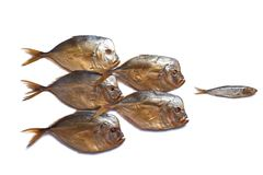 One small fish against a big fishes. Smoked big fish Vomero and one small fish isolated on  white background Royalty Free Stock Images