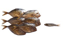 One small fish against a big fishes. Smoked big fish Vomero and one small fish isolated on  white background Royalty Free Stock Photo