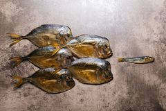 Big fishes on the wood view from the top. Smoked big fish Vomero and one small fish  on wooden background Stock Images