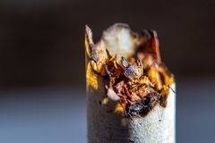 Smoked cigarette Stock Photo