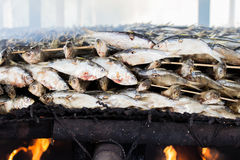 Smoked fish from fishing village food industry at krabi thailand Royalty Free Stock Photos