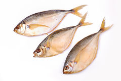 Smoked fish isolated Royalty Free Stock Photography