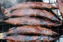 Smoked fish pike in smokehouse. Royalty Free Stock Photo