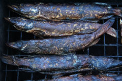 Smoked fish pike in smokehouse. Royalty Free Stock Images