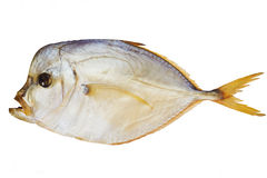 Smoked fish. Piranha  isolated on a white with clipping path Stock Images
