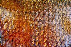 Smoked fish scales Stock Photography