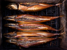 Smoked fish in the smokehouse. Fish kopitsa on the coals Royalty Free Stock Photos