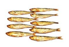 Smoked fish, sprats Stock Image