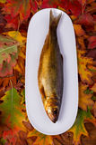 Smoked fish on a white plate Stock Image