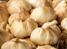Smoked garlic detail Stock Image