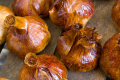 Smoked garlics Stock Images