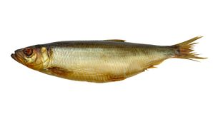 Smoked herring Stock Photo