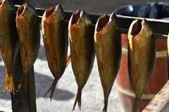 Smoked herring Stock Image