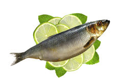 Smoked Mackarel on lime slices and mint herb isolated on white Stock Images