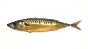 Smoked mackerel. Golden color on a white background stock photos