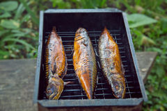 Smoked mackerel. On a lattice Royalty Free Stock Photo