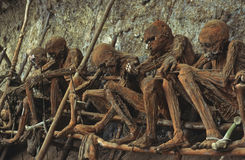 Smoked mummies. In Papua new Guinea some tribes believe that putting there dead family members above the village protects them from disaster. These dead people Royalty Free Stock Photo
