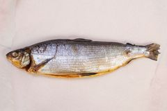Smoked salted Whitefish. With spices Royalty Free Stock Photo