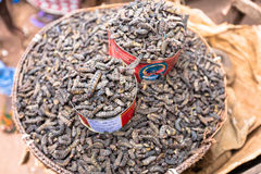 Smoked silkworms, Burkina Faso Royalty Free Stock Image