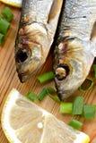 Smoked sprat-appetizing snack Stock Photos