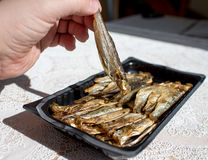 Smoked sprats. Stock Images