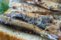 Smoked sprats with spices tapas Royalty Free Stock Photography