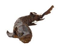 Smoked sturgeon Stock Photo