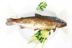 Smoked Trout Stock Photo