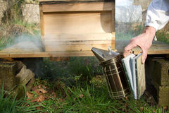 Smoker and hive. A metal bee smoker with bellows being squeezed by a hand in front of a wooden hive on a stand Stock Photo