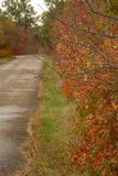 Smoketree van Cotinuscoggygria in de herfst royalty-vrije stock afbeeldingen