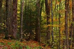 smokey βουνών Στοκ εικόνες με δικαίωμα ελεύθερης χρήσης