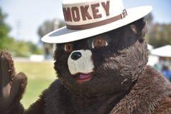 Smokey η αρκούδα στοκ εικόνες με δικαίωμα ελεύθερης χρήσης