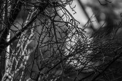Smokey Branches immagine stock libera da diritti