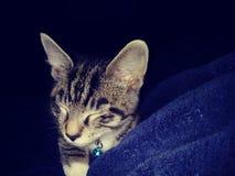 Smokey el gato foto de archivo libre de regalías