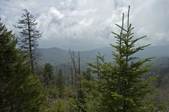 smokey för berg för clingmanskupol stor Royaltyfri Foto