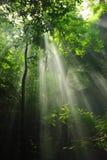 Smokey forest stock photos