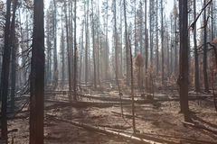 Smokey Forest Fire Aftermath Royalty Free Stock Images
