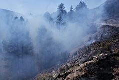 Smokey Forest Fire. A forest fire chars the base of conifer trees in a forest with a mountain backdrop in an arid climate Royalty Free Stock Photos