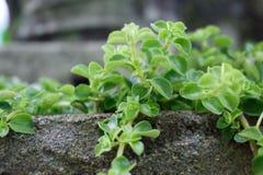 Smokey groen blad royalty-vrije stock afbeelding