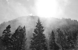 Smokey Mountain Trees. Trees in a valley between mountains, engulfed by smoke from an old-time coal engine train passing through Colorado Royalty Free Stock Photos