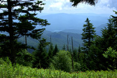 Clingmans Dome Parking area view North Carolina. Sweeping Mountain Vista view of Little Tennessee River framed by pine trees royalty free stock photography