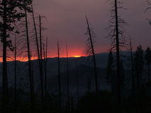 Smokey sunset with burnt pine trees silhouetted Stock Photography