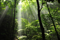 Smokey Wald 2 Lizenzfreie Stockfotos