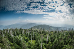 The Smokies from Clingman's Dome. A wide view of the Great Smoky Mountains from the top of Clingman's Dome stock images