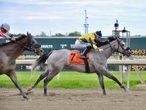 Smokin nitro, un atleta equino sbalorditivo immagini stock