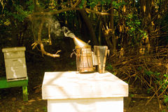 Smoking bees at an apiary on bequia Royalty Free Stock Images