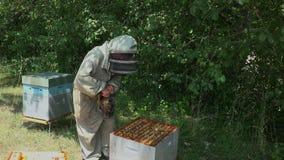 Smoking bees stock footage