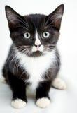 Smoking Cat Adoption Photo Imágenes de archivo libres de regalías