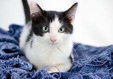 Smoking Cat Adoption Photo fotografia de stock