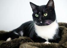 Smoking Cat Adoption Photo fotografia de stock royalty free